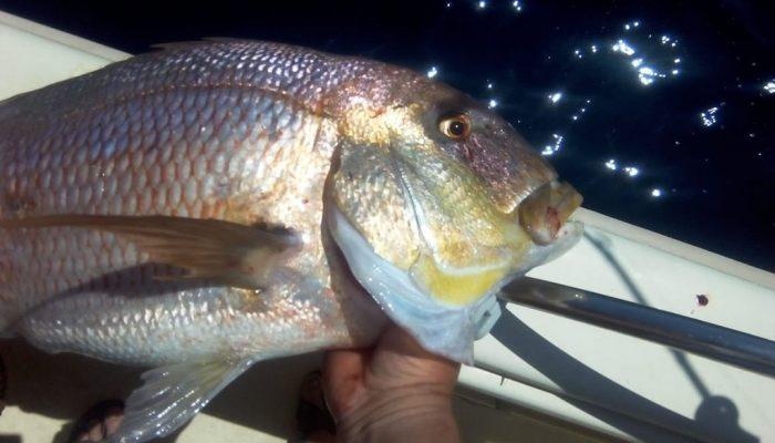 Fishing Tours in Kassandra